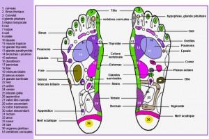 ob_ead9e2_carte-reflexologie-plantaire